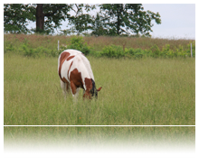 One horse grazing in tall grass