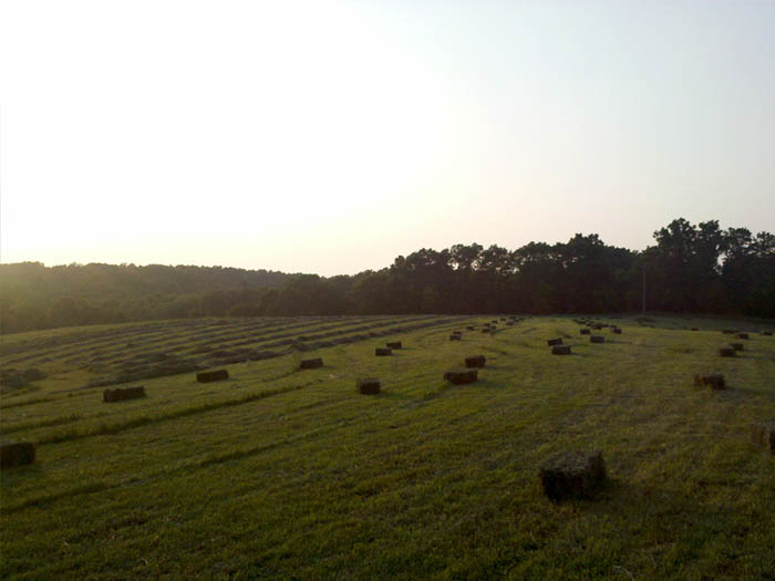 Square bales in the hay field