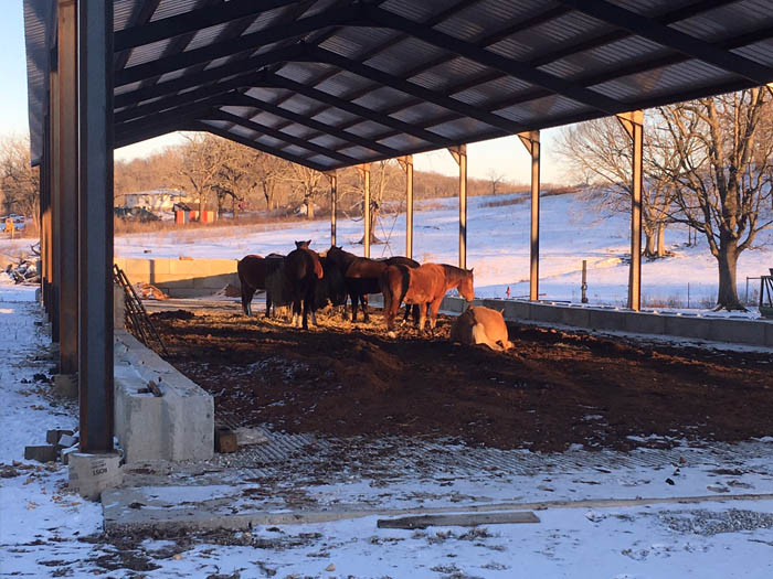 Horses eating hay in forage barn